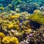 Twin Peaks Reef